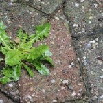 How to Kill Weeds in Your Driveway